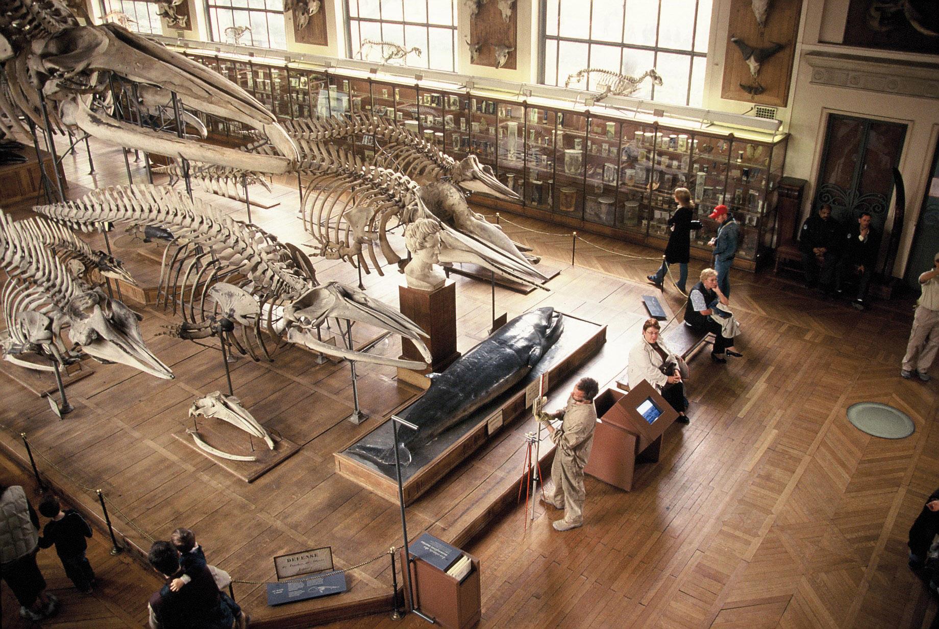 Museo Interno copia